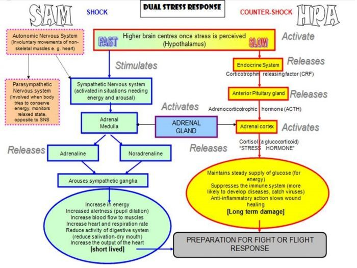 dual-stress-response-chart-700x525