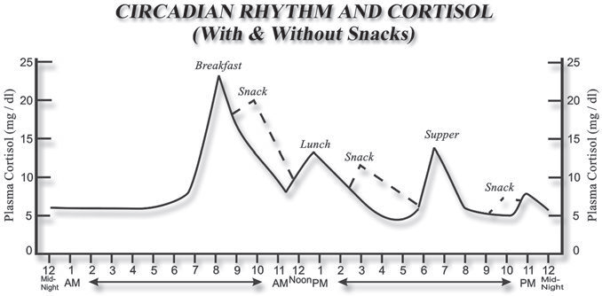 circadian rhythm of cortisol