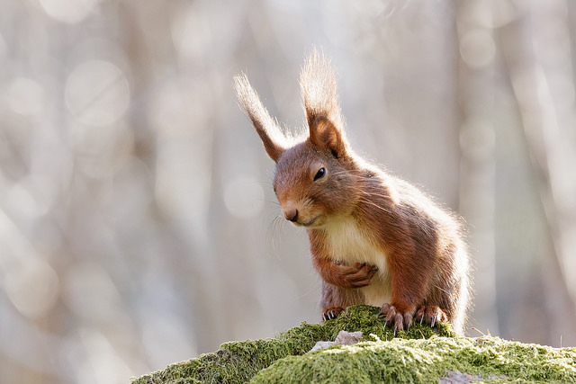 squirrel with stomachache by Flickr user Hanna Knutsson