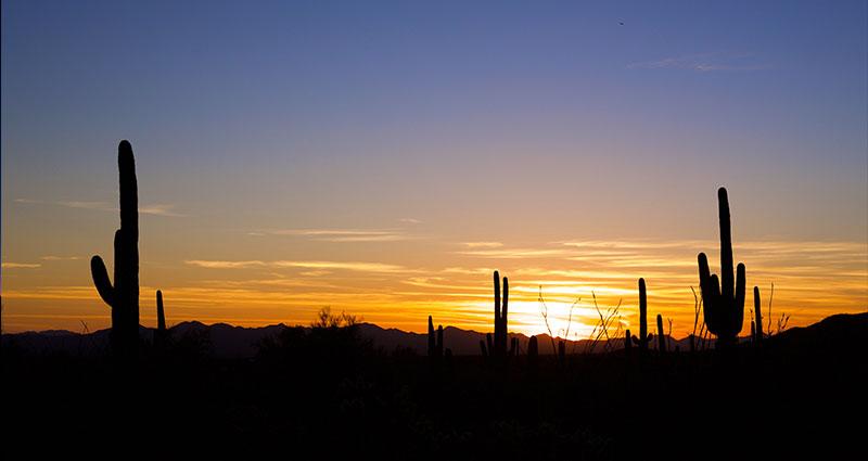 Desert sunset with cactus'