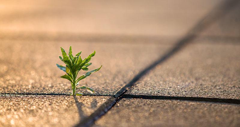 Small plant growing through sidewalk