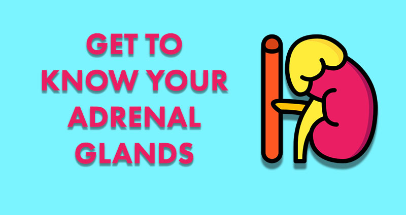 get to know your adrenal glands