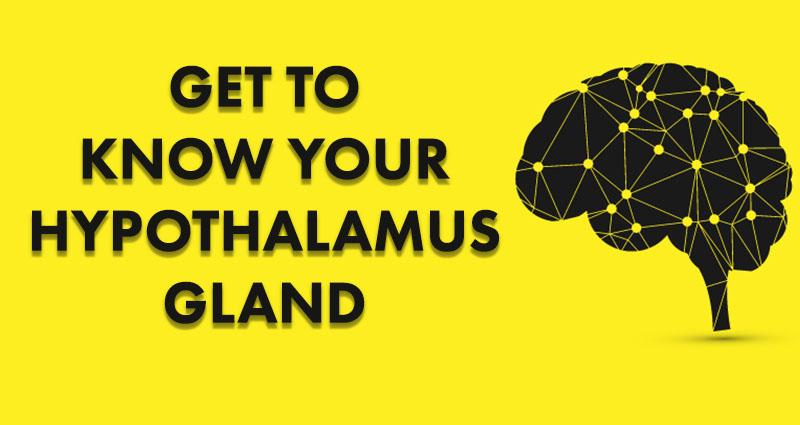 get to know your hypothalamus