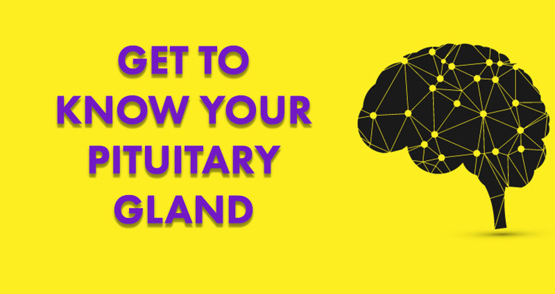 get to know your pituitary gland